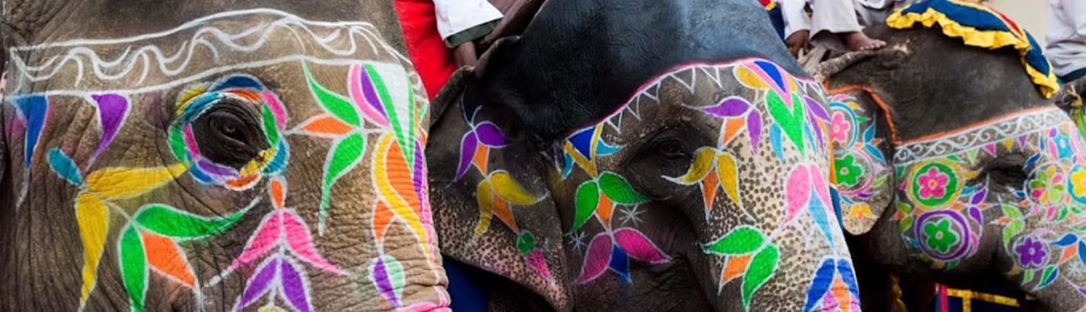 The Colourful Elephant Festival
