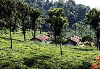 Unexplored Ooty