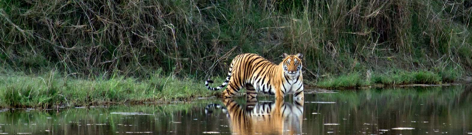 3 Reasons that Will take you Closer to Nature at Sultanpur National Park